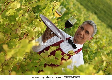 Waiter serving glasses of wine in a vineyard