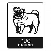 Pug Purebred Icon. Simple Illustration Of Pug Purebred Icon For Web Design Isolated On White Backgro poster