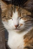 Portrait Of A Street Cat. Stray Cats. Sad Animal Bold Eyes. Eyes Full Of Sadness And Grief. Wool, Ca poster