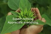 Inspirational Motivational Quote-expect Nothing, Appreciate Everything. With Blurry Fresh Green Youn poster