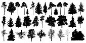 Tree Silhouette Black Vector. Isolated Set Forest Trees On White Background poster