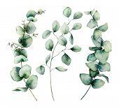 Watercolor Silver Dollar Eucalyptus Set. Hand Painted Baby, Seeded And Silver Dollar Eucalyptus Bran poster