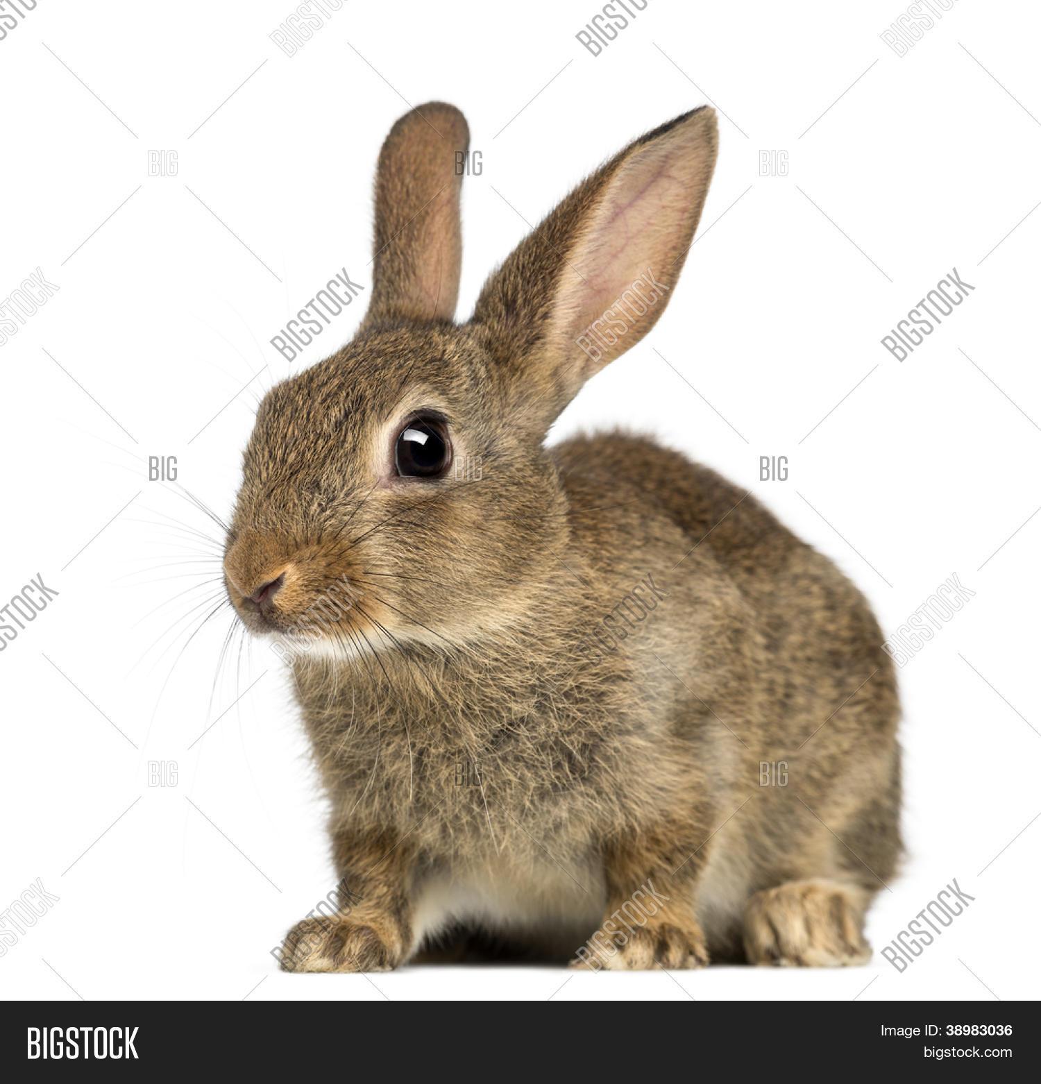 Image et photo de lapin de garenne ou lapin bigstock - Cuisiner un lapin de garenne ...