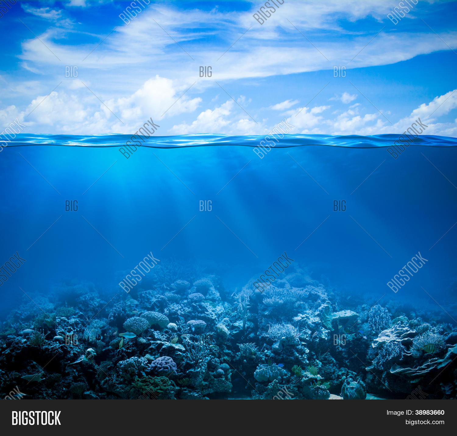 sea bed beach vector - photo #22