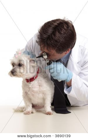 Vet Checking Dog