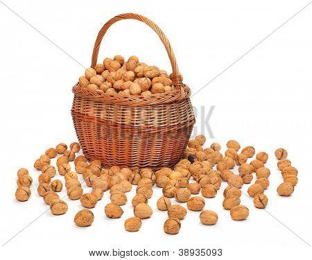 Recién cosechados los Nogales (Juglans regia) en una cesta.