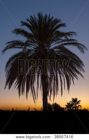 Palm Tree After Sunset