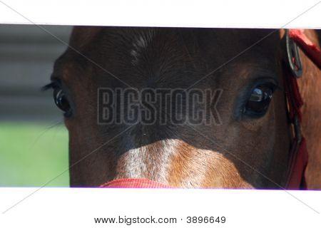 Beekaboo Horse