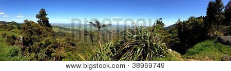 Panoramic of New Zealand bush