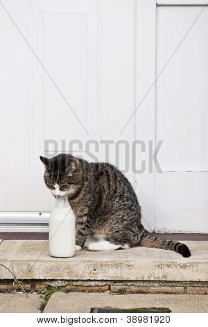 0590 Cat And Milk Bottle