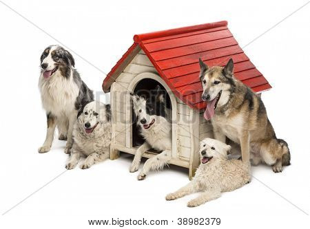 Group of dogs in and surrounding a kennel against white background