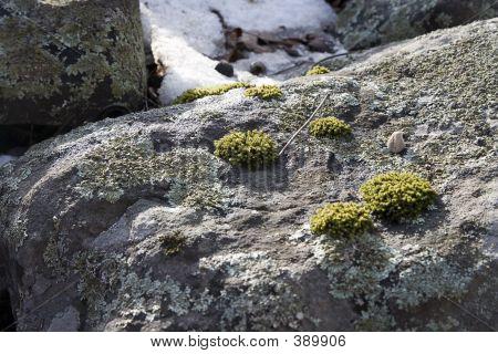 Rocks And Moss2