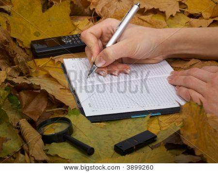 Office On Leaves