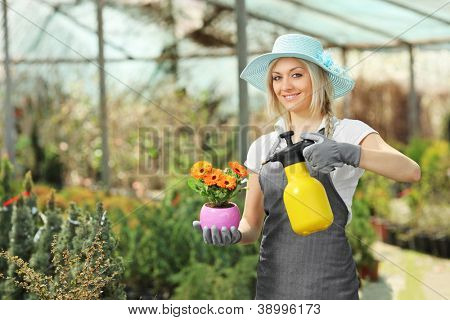 A beautiful female gardener watering a plant in a hothouse