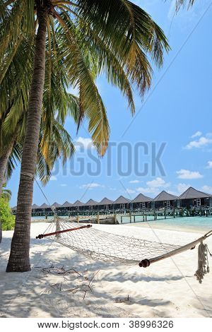 A scene from Kuredu island, Maldives, Lhaviyani atoll, sandy beach, palm trees and hammock