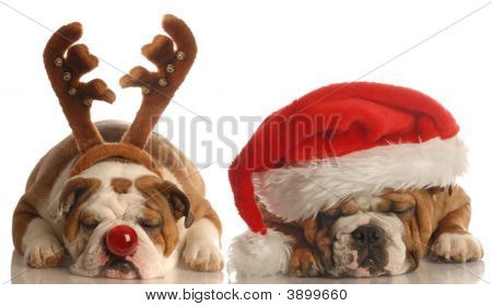 Bulldog With Santa Hat And