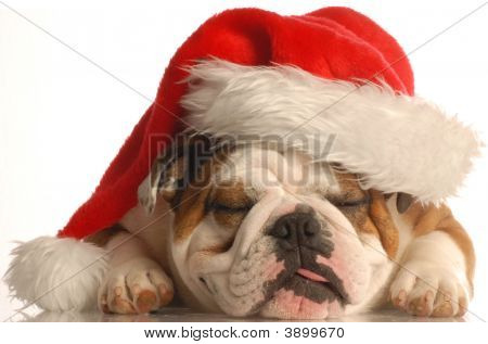 Bulldog Wearing Santa Hat