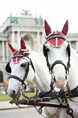 stock photo of hackney  - head portrait of two horses in traditional Vienna carriage harness - JPG