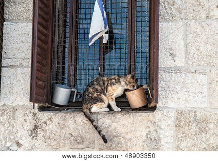 Cat On Cornice