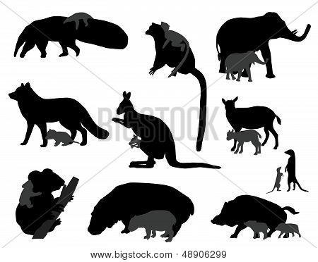 animal kids