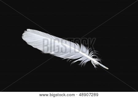 The White Feather Of A Bird