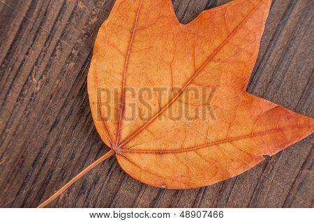Autumn leaf on textured wood background