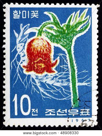 Postage Stamp North Korea 1967 Korean Pasque Flower