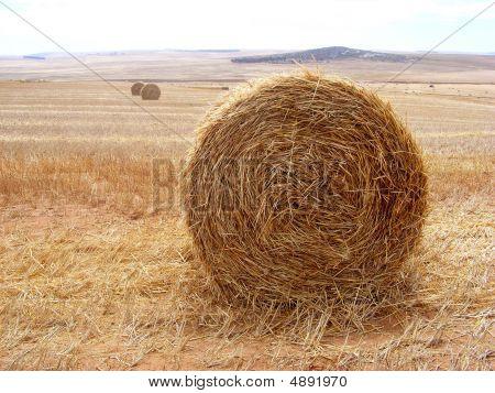 Bales In A Field