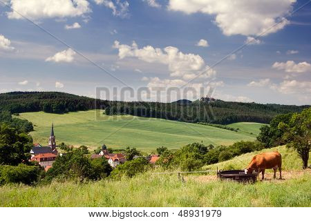 Landscape Thuringia with cow