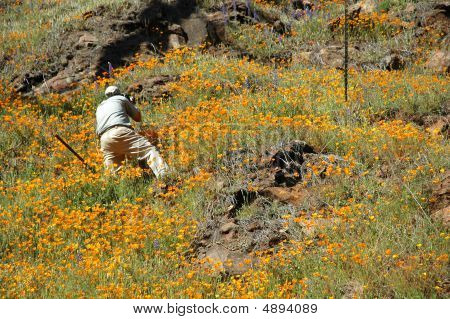 Photographer In Poppies