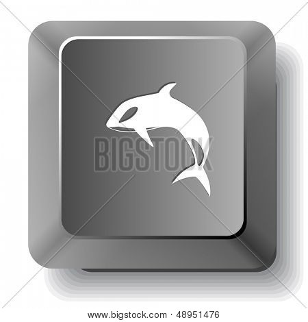 Killer whale. Vector computer key.