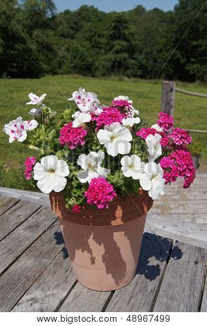 Summer potted plants