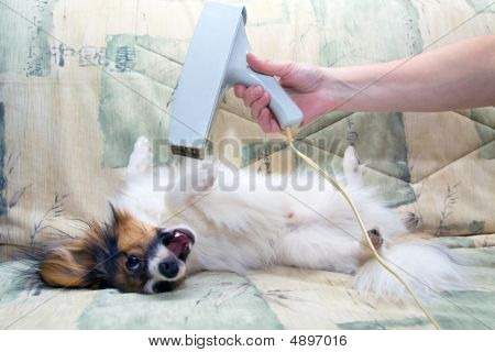 Grooming For A Dog