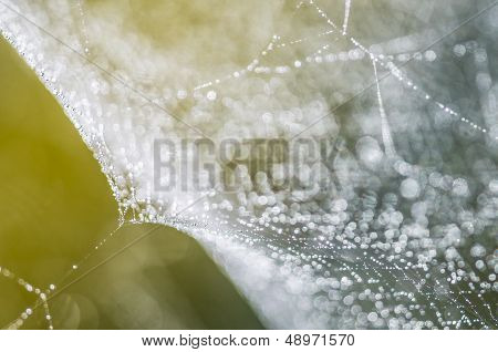 Dew Drops On Spiderweb I
