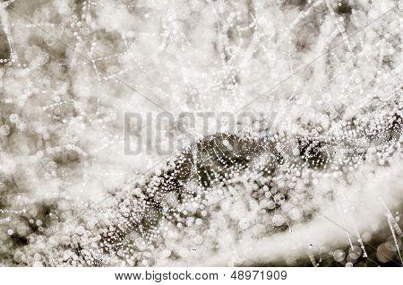 Dew Drops On Spiderweb I