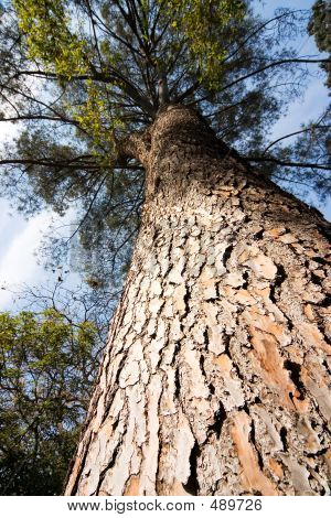 2815 Tree Trunk