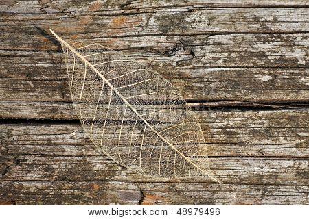 Intricate structure of a fallen leaf.