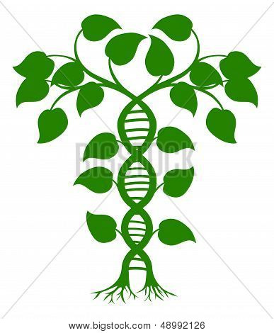 DNA Nature Plant