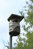 stock photo of songbird  - Songbirds nest box on a pole in a garden - JPG