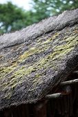 Thatch Roof With Moss