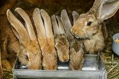 stock photo of rabbit hutch  - Rabbits drinking inside a cage - JPG