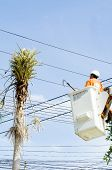 picture of cherry-picker  - Electrician worker in cherry picker solve palm leaf and protect a wire of the power line - JPG
