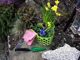 picture of fescue  - Cheerful basket containing pansies daffodils and pink gloves rests on rock next to green trowel - JPG