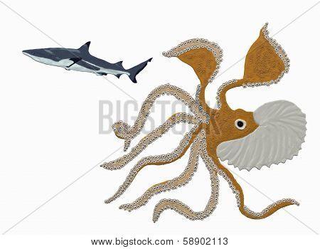 Mollusk and shark