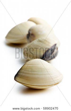 fresh clams on white background