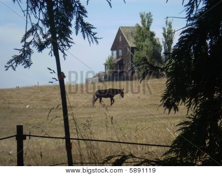 Haunted house with horse