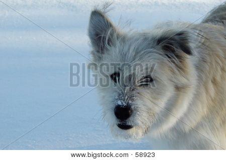 Snow Kisser