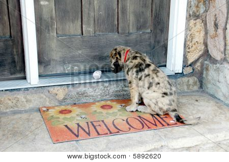 Puppy Waiting at the Door