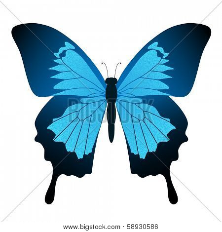 Illustration Blue butterfly isolated on white background. Papilio Ulysses. Vector.