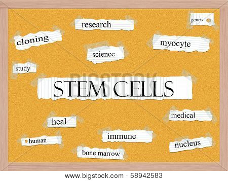 Stem Cells Corkboard Word Concept